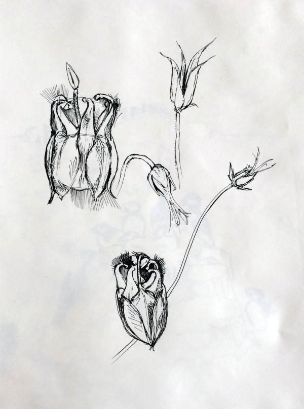 flora5